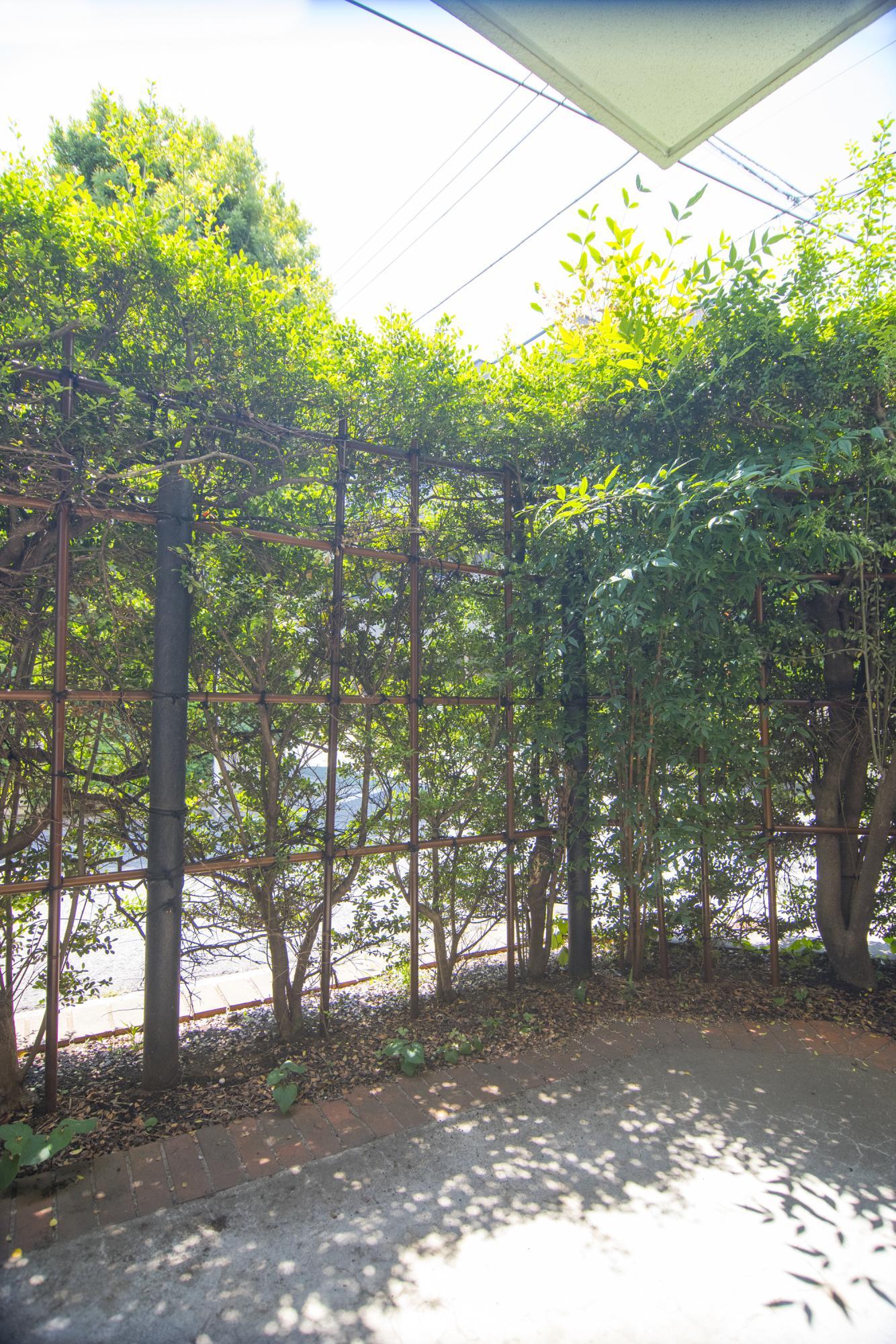 大きなお庭には垣根があるのでプライバシーもばっちり。