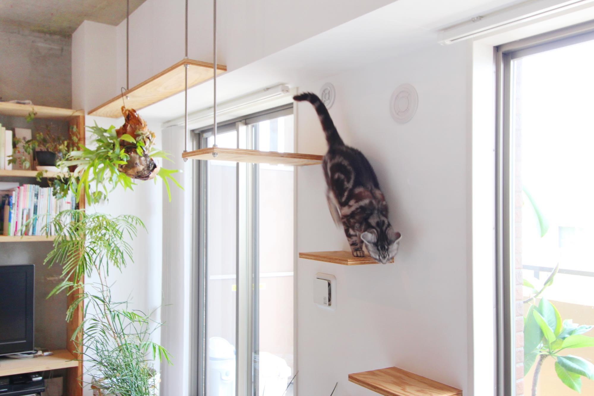 キャットウォークを登る猫ちゃん。猫ちゃんも暮らしを楽しめるような空間に。
